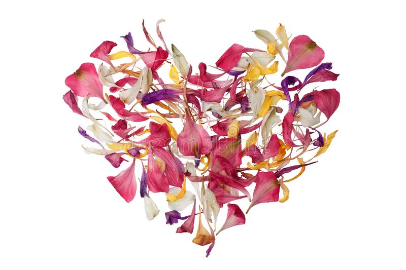 Multicolored heart shape flower petals on white background isolated close up, heart form floral decorative design element. Of red, pink, yellow, purple flower stock photography