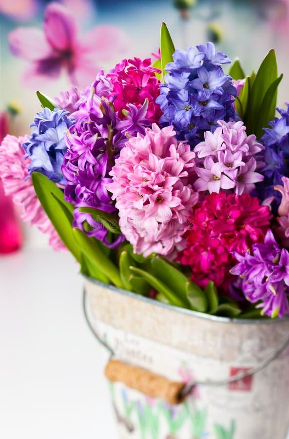 Multicolored hyacinten stock foto