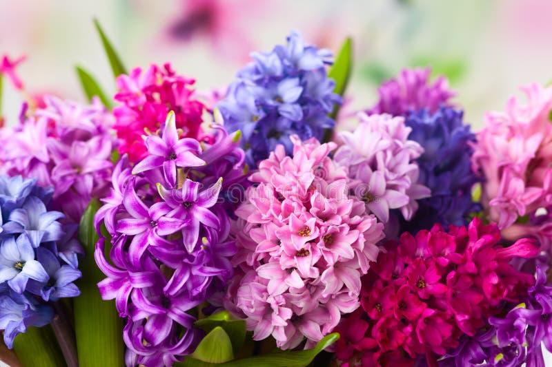 Multicolored hyacinten royalty-vrije stock foto's