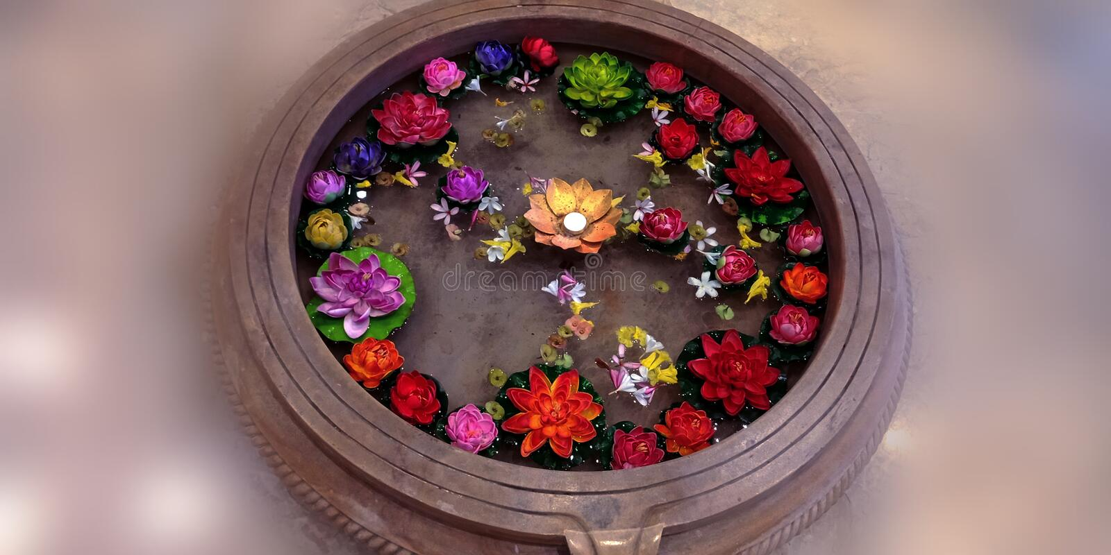 Multicolored lotus flower water tub stock photo stock images