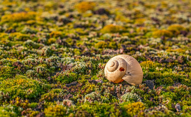 Multicolored moss and snail shell. Closeup view royalty free stock image