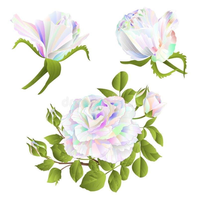 Multicolored nam toe en de knoppen op een witte achtergrond geplaatst eerste uitstekende vector botanische illustratie editable h stock illustratie