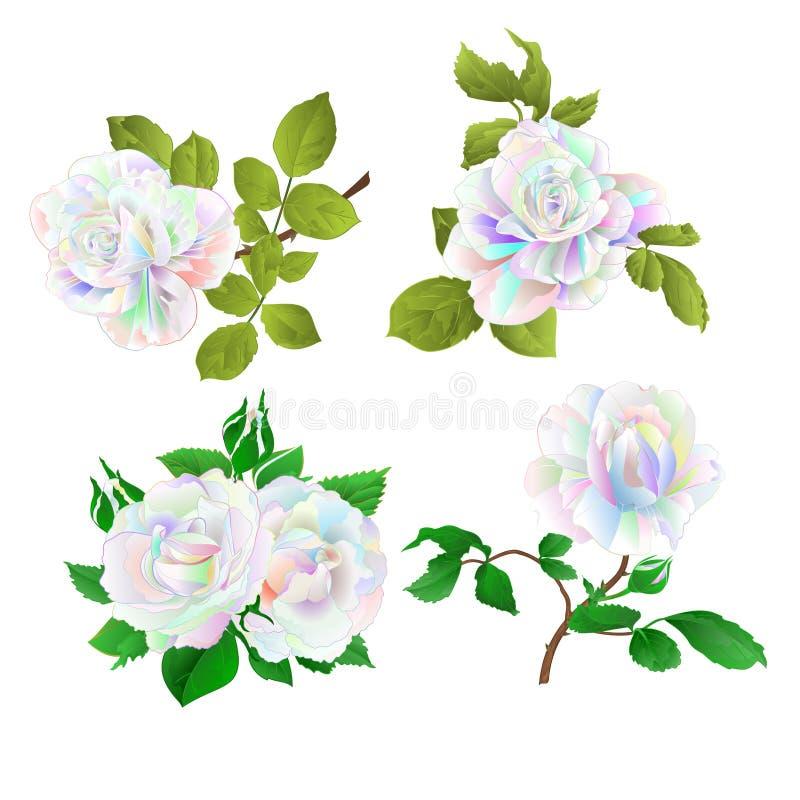 Multicolored nam toe en de knoppen op een witte achtergrond plaatsen drie uitstekende vector botanische illustratie de editable h royalty-vrije illustratie