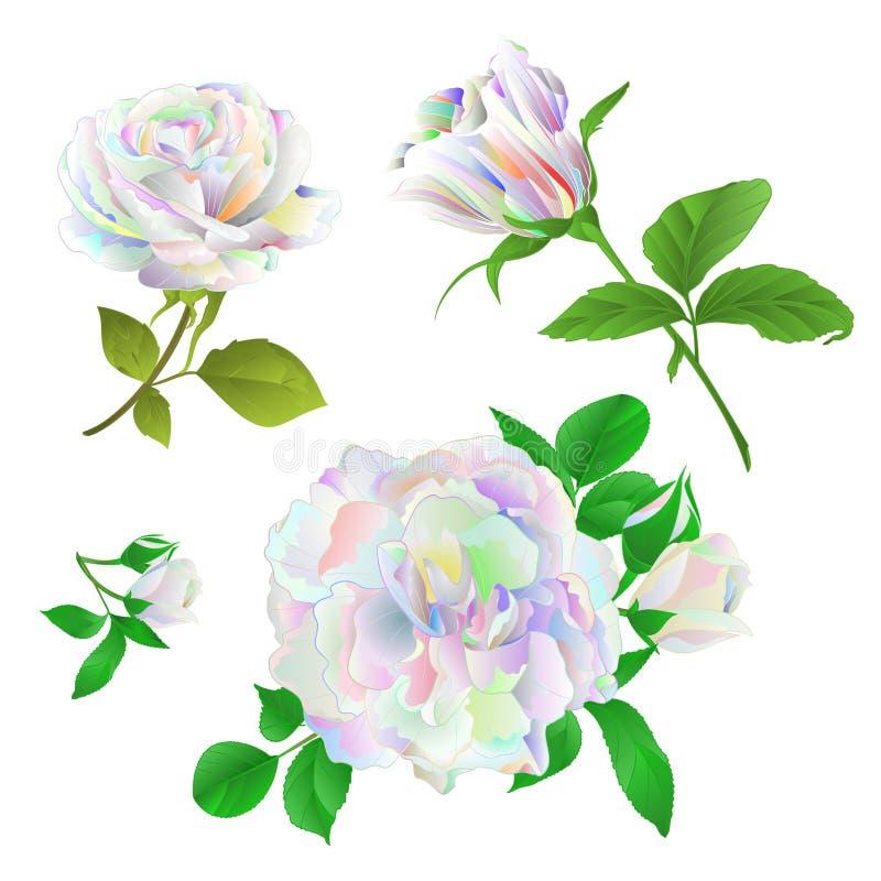 Multicolored nam toe en de knoppen op een witte achtergrond plaatsten tweede uitstekende vector botanische editable illustratie vector illustratie