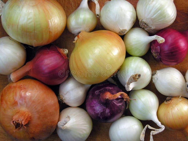 Multicolored onion stock photos