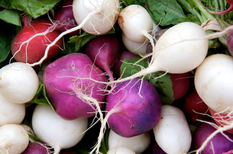 Download Multicolored radishes stock photo. Image of market, radishes - 5263698