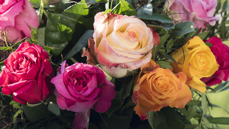 Multicolored roses. Detail from bouquet of multicolored roses royalty free stock photo