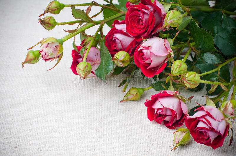 Multicolored Roses On Linen Fabric Stock Photo