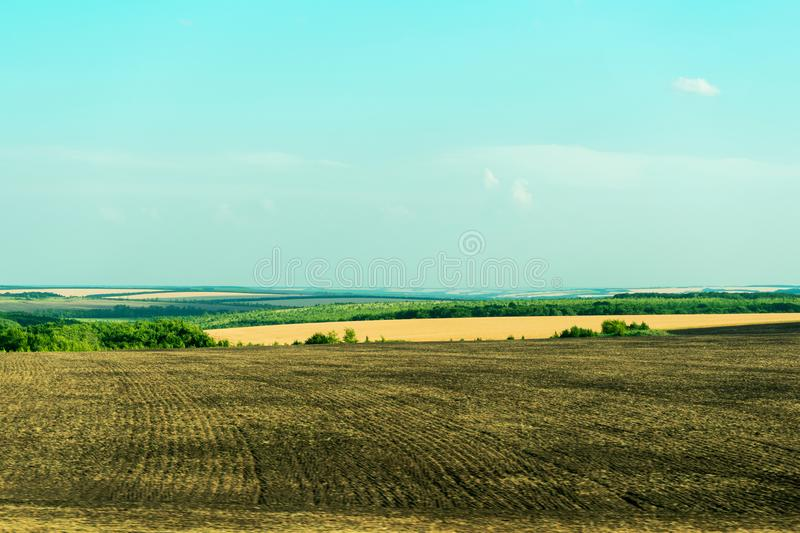 Multicolored rural summer landscape. Yellow field of wheat ears and plowed brown arable land. Green stripes of the forest. royalty free stock photos
