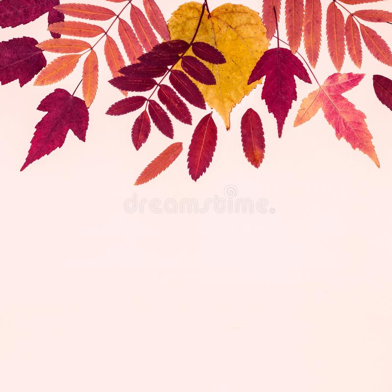 Multicolored set autumn leaves on pink pastel background. Hello Autumn concept.  stock photography
