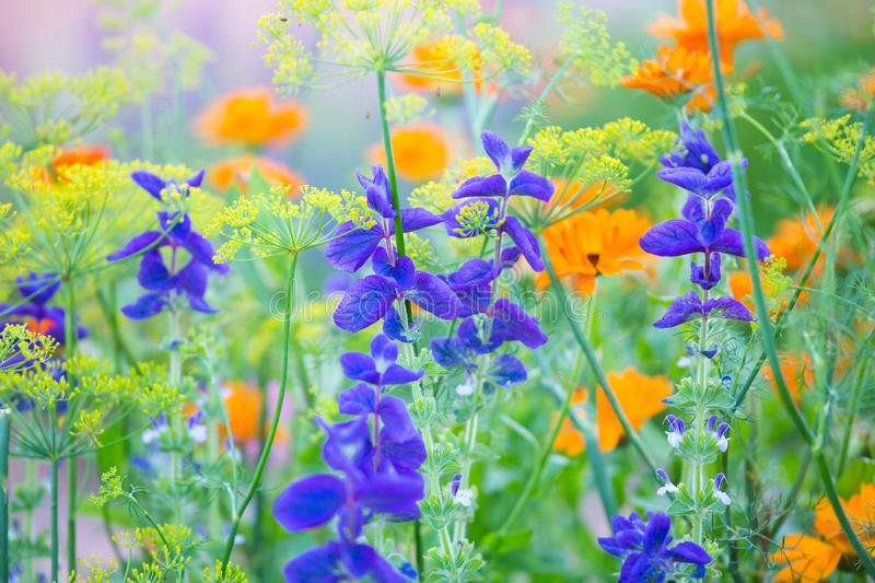 Multicolored small flowers royalty free stock images