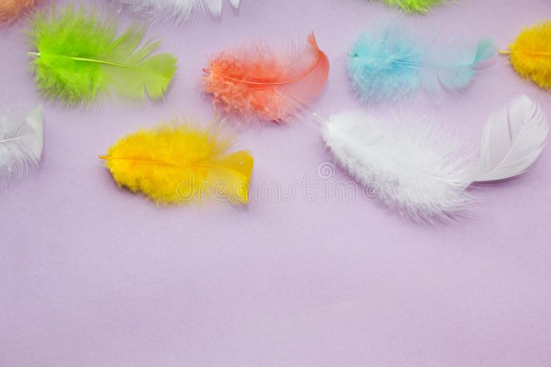 Multicolored soft parrot feathers on a purple background, space for text.  royalty free stock photography
