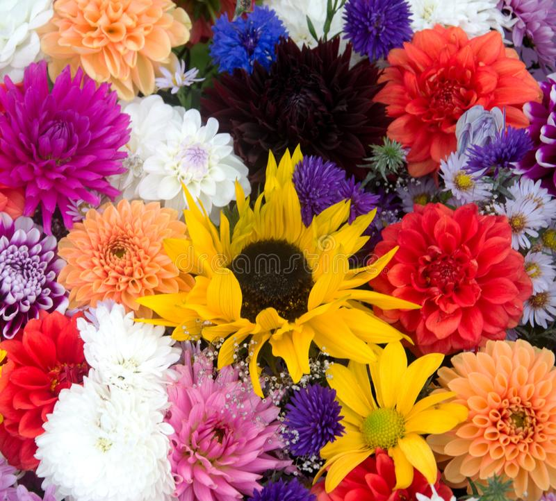 Multicolored Spring Flowers, Closeup. Bunch Of Colorful Flowers Or ...