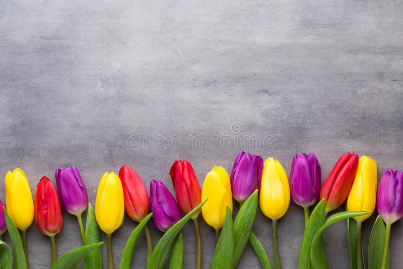 Multicolored spring flowers, tulip on a gray background. royalty free stock photography