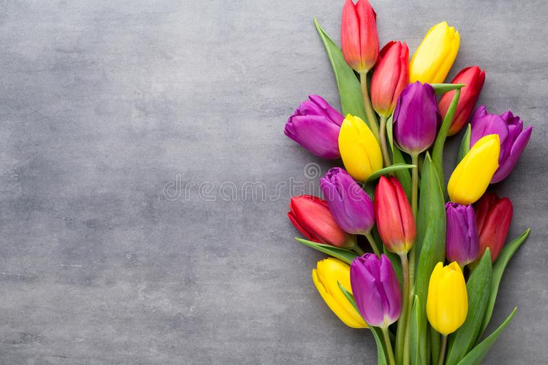 Multicolored spring flowers, tulip on a gray background. Multicolored spring flowers, tulip on a gray background royalty free stock photos