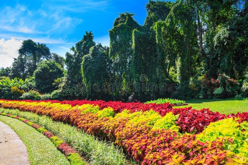Multicolored steeg van bloemen en bomen royalty-vrije stock afbeelding