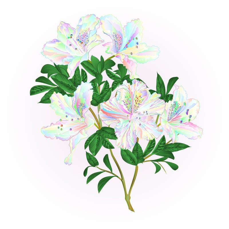 Multicolored takje van de bloemenrododendron met de struik van de bladerenberg op een witte uitstekende vector editable illustrat vector illustratie