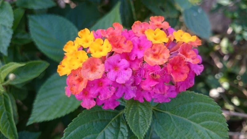 multicolored tiny flowers stock photo