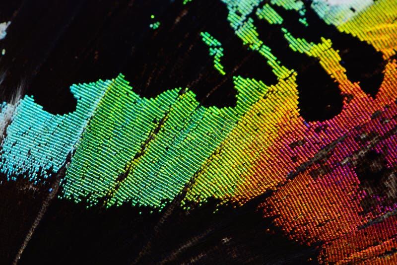 Multicolored vlindervleugel royalty-vrije stock afbeelding