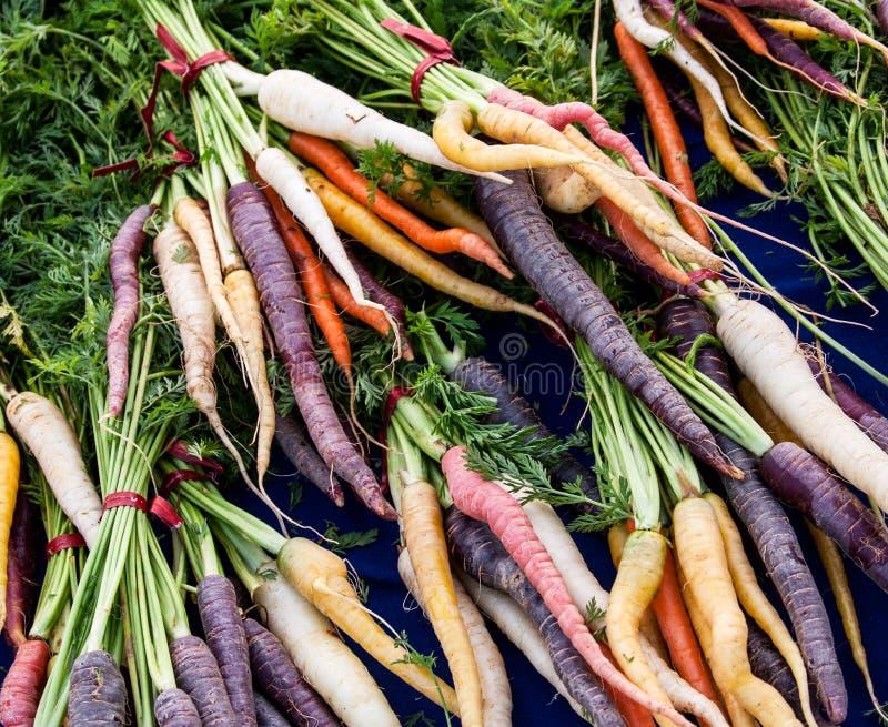 Multicolored wortelen stock afbeeldingen