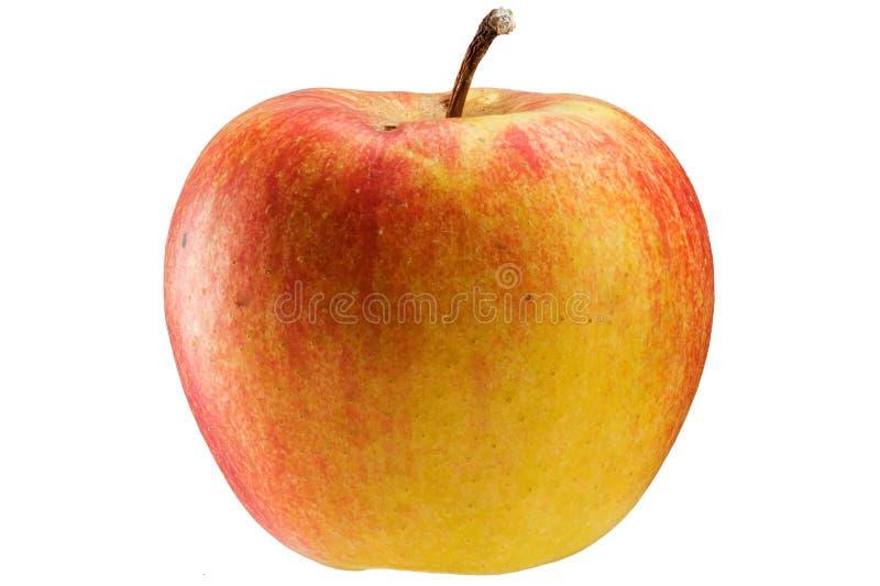 Multicoloured appel stock foto's