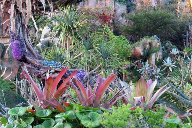 Multicoloured Plants in Pandora. These fantastic alien multicoloured plants at Animal Kingdom in the Pandora area of the park are amazing to see royalty free stock images