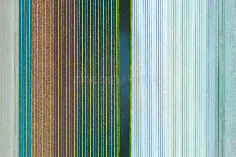 Multicolours flowers field aerial view from drone in Holland , spring time flowers in Keukenhof royalty free stock image