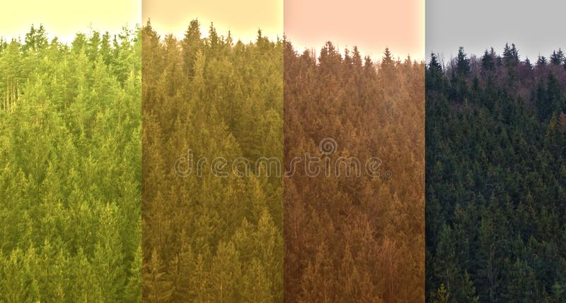 Symbol of equality on idea deep forest. royalty free stock photography