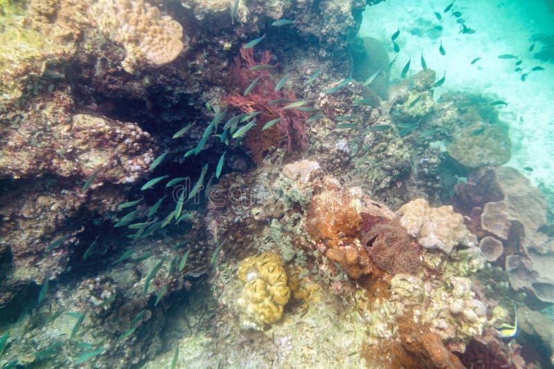 Multidão colorida subaquática dos peixes do recife de corais foto de stock royalty free