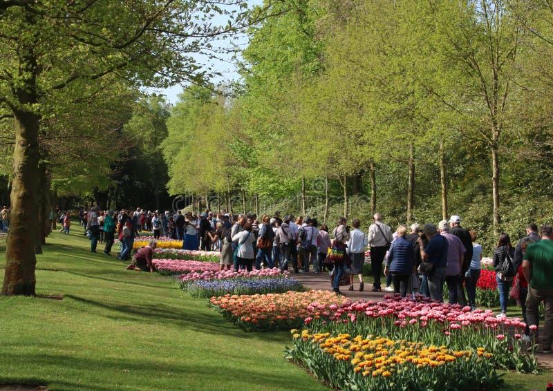 Multidões de visitantes que andam por camas de tulipa Keukenhof imagens de stock