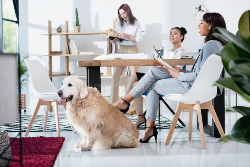 Multietniska kvinnor i formella kläder som arbetar på kontoret med hunden royaltyfri foto