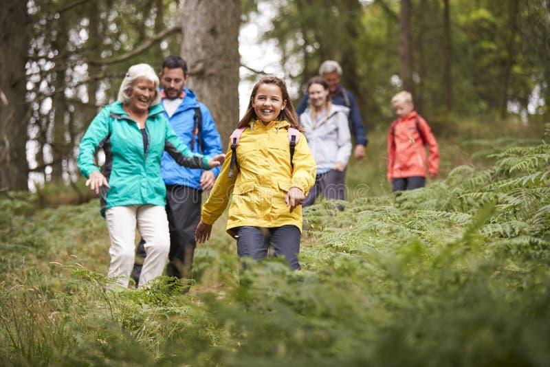 Multigeneratiefamilie die bergaf op een sleep in een bos tijdens een kampeervakantie, Meerdistrict, het UK lopen royalty-vrije stock foto