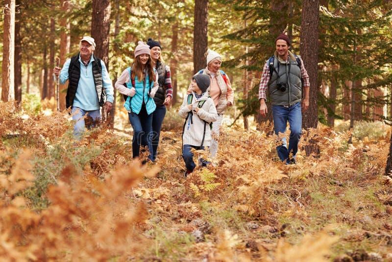 Multigeneratiefamilie die in een bos, Californië, de V.S. wandelen royalty-vrije stock foto's