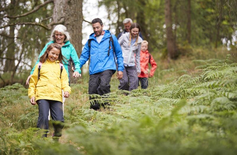 Multigeneratiefamilie die in lijn bergaf op een sleep in een bos tijdens een kampeervakantie, Meerdistrict, het UK lopen stock afbeelding