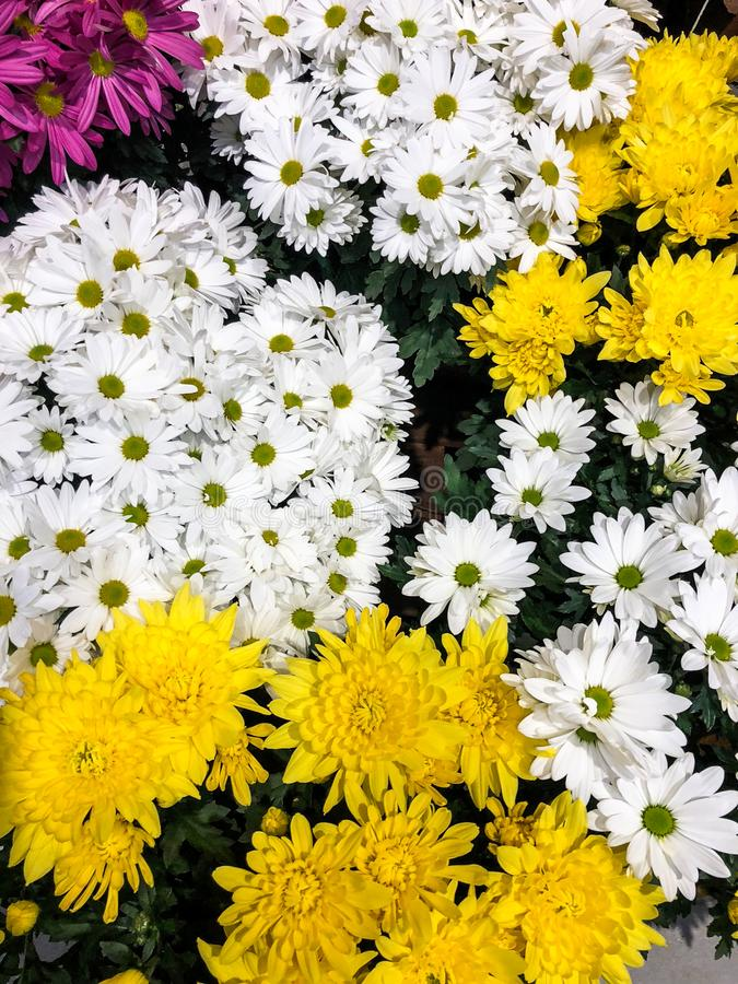 Multiple bouquets of white, yellow and hot pink flowers stock photos