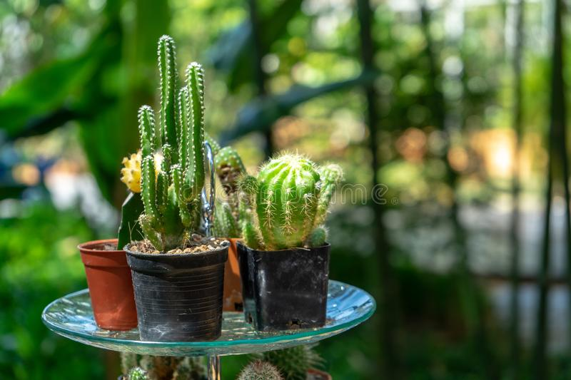 Multiple combined cactus decor together on the dessert dish on the fruit line buffet at the garden in Thailand royalty free stock photo