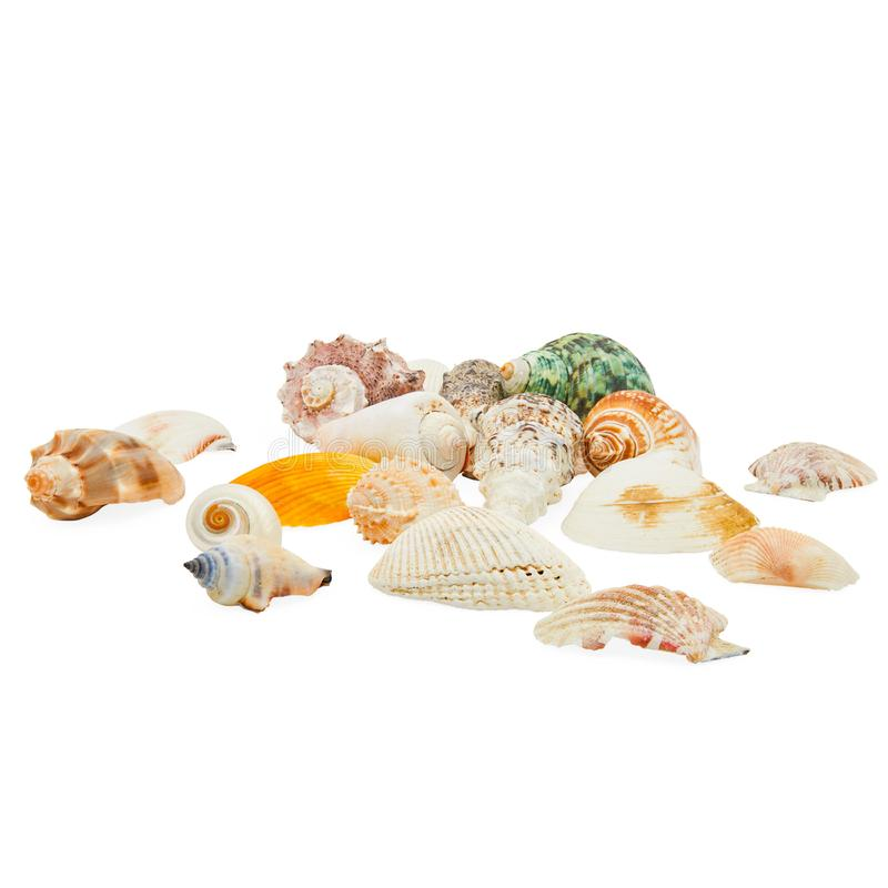 Isolated Multi Colored Sea Shells Straight On Angle royalty free stock photography