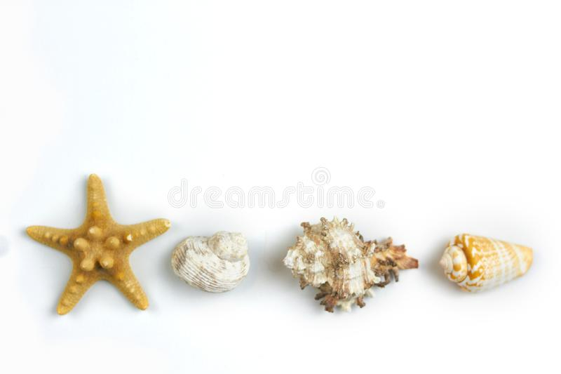 Isolated seashell on a white background stock images