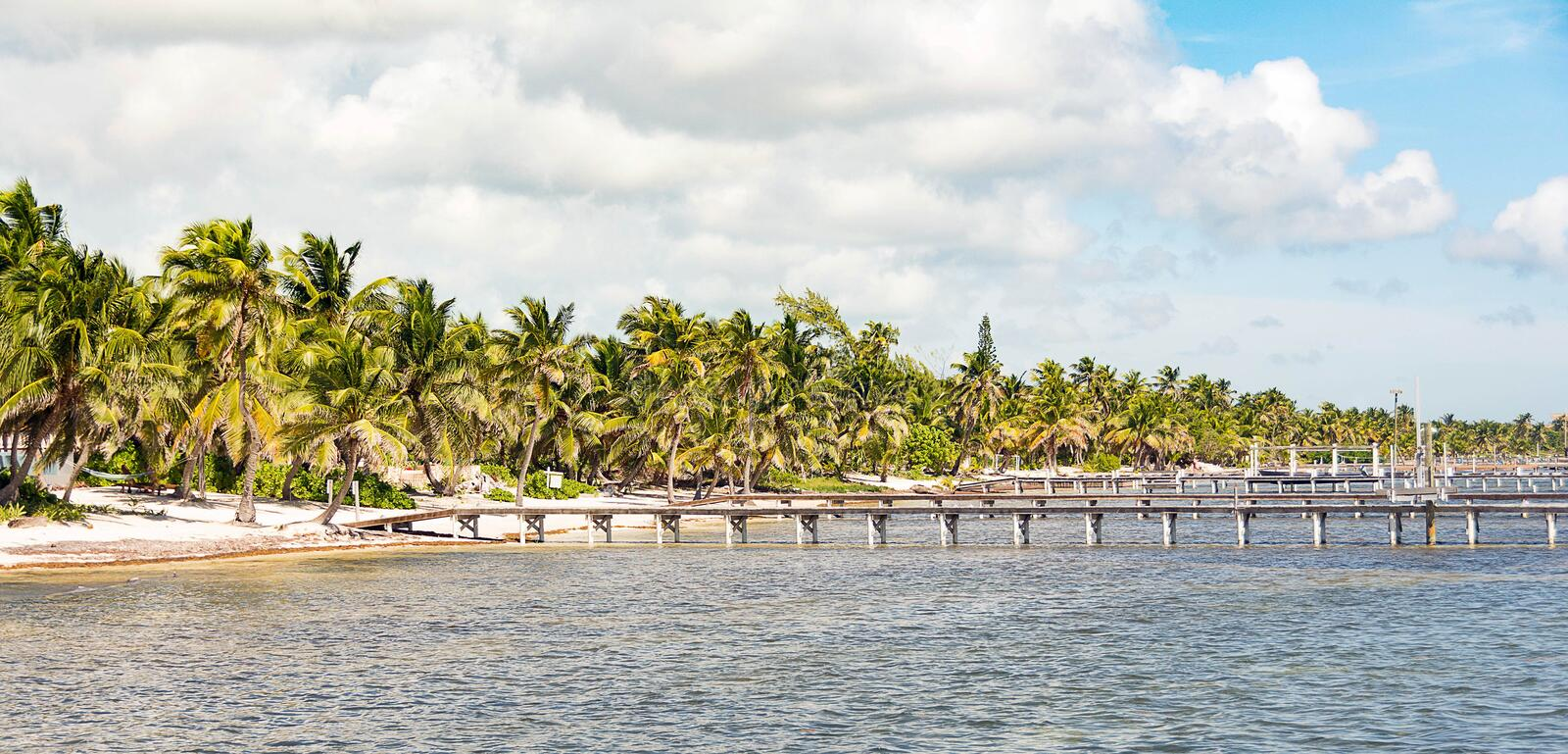 Multiple Piers with Palm Trees on Beach. Multiple piers reaching into shallow waters off the coast id San Pedro Island, Belize stock images