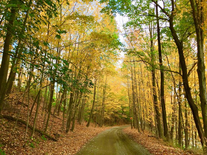 Multiple trees with fall colors on trail royalty free stock image