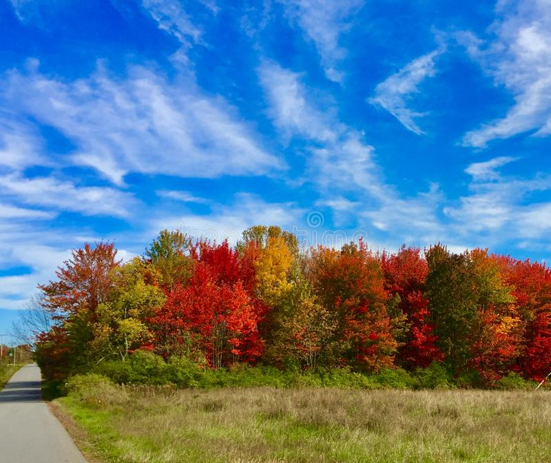Multiple trees with fall colors with road royalty free stock photos