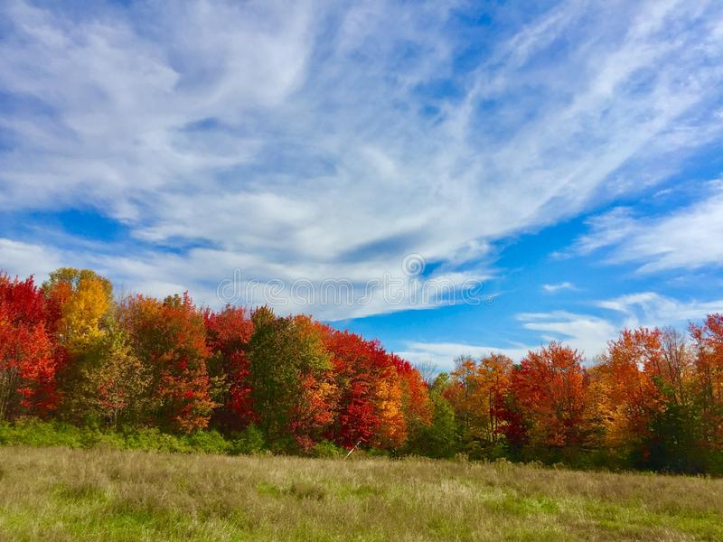 Multiple trees with fall colors royalty free stock photos