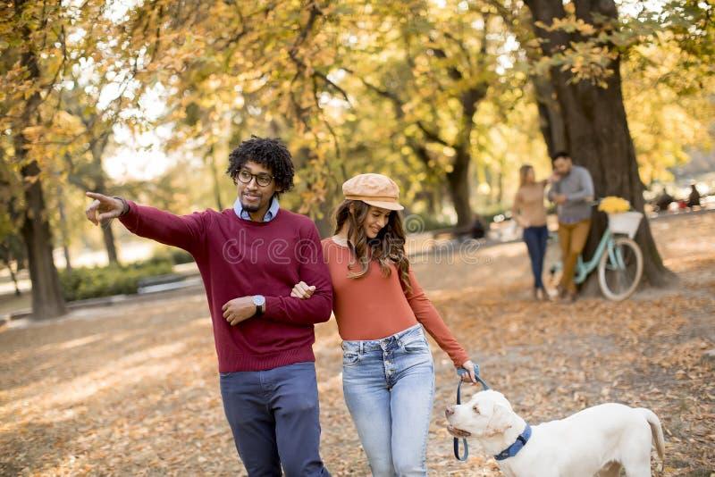 Multiraciaal paar die met hond in de herfstpark lopen royalty-vrije stock foto