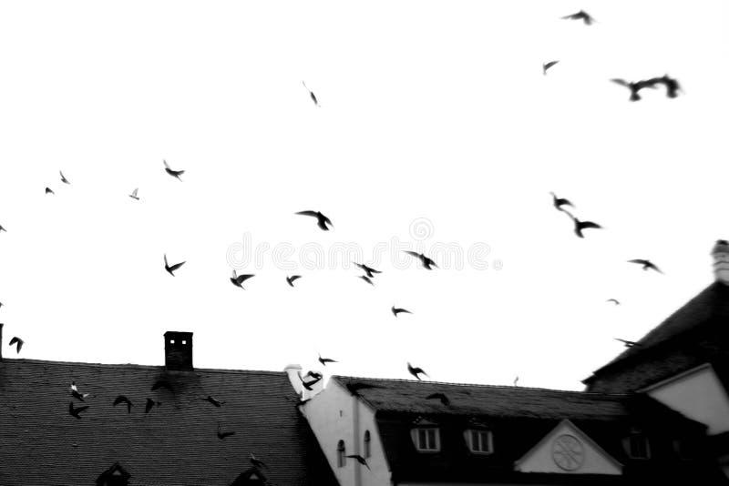 Multitud blanco y negro de pájaros fotos de archivo
