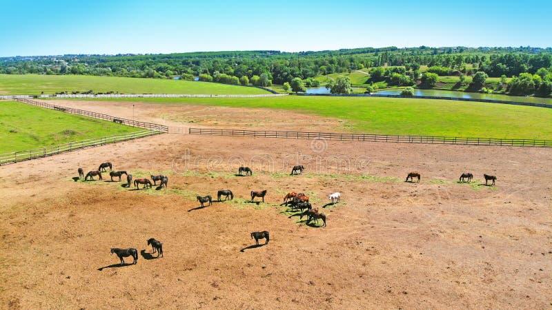 Multitud de caballos en un corral aéreo foto de archivo