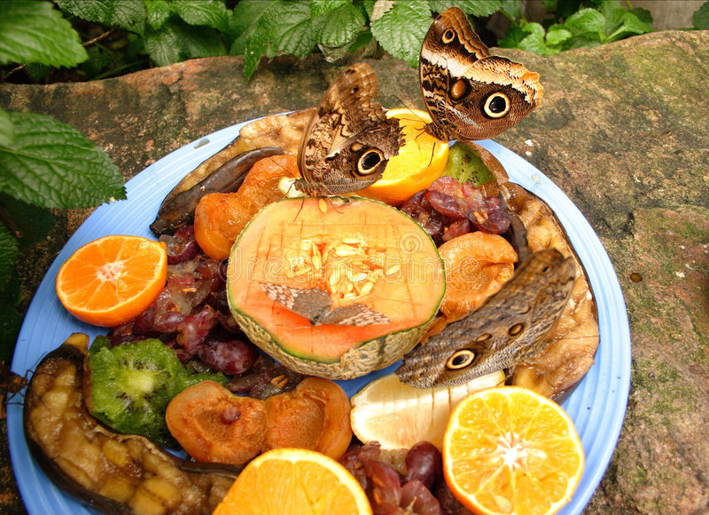 Multitud de las mariposas a la fruta fotografía de archivo libre de regalías