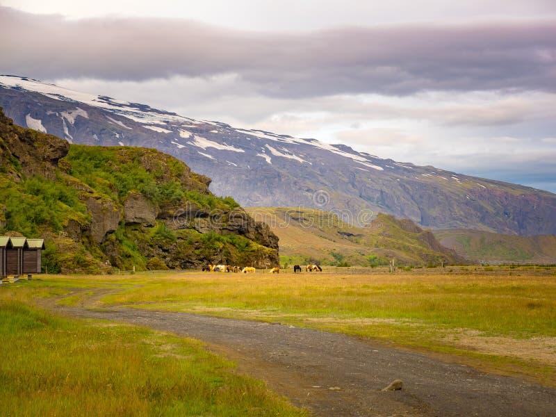 Multitud de los caballos que pastan en el campo de hierba fotografía de archivo