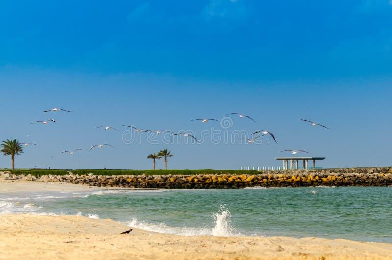 Multitud de los pájaros que se van volando imagenes de archivo