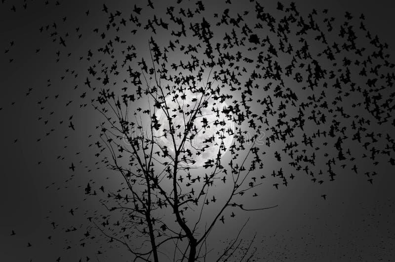 Multitud de los pájaros que vuelan en el claro de luna libre illustration