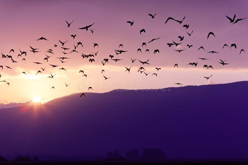 Multitud de los pájaros que vuelan en la puesta del sol imagen de archivo libre de regalías